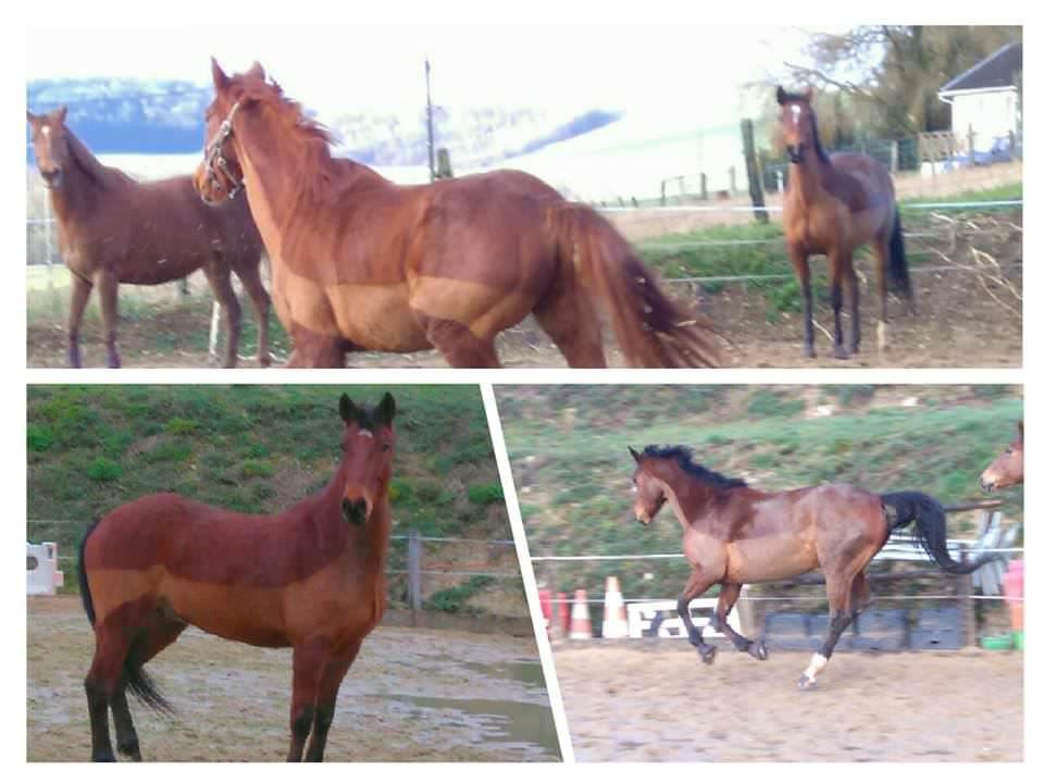 centre équestre accueille vos chevaux et poneys en Haute-Marne