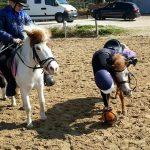 MINIS HORSE BALLEURS