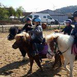MINIS HORSE BALLEURS 2